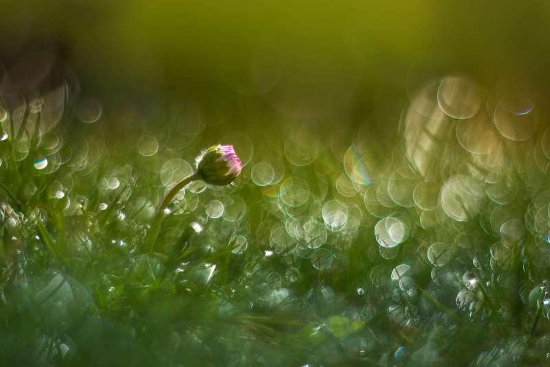 «Gänseblümchen» von Petra Jung