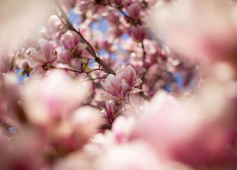 «Magnolien» von Fatma Nayir